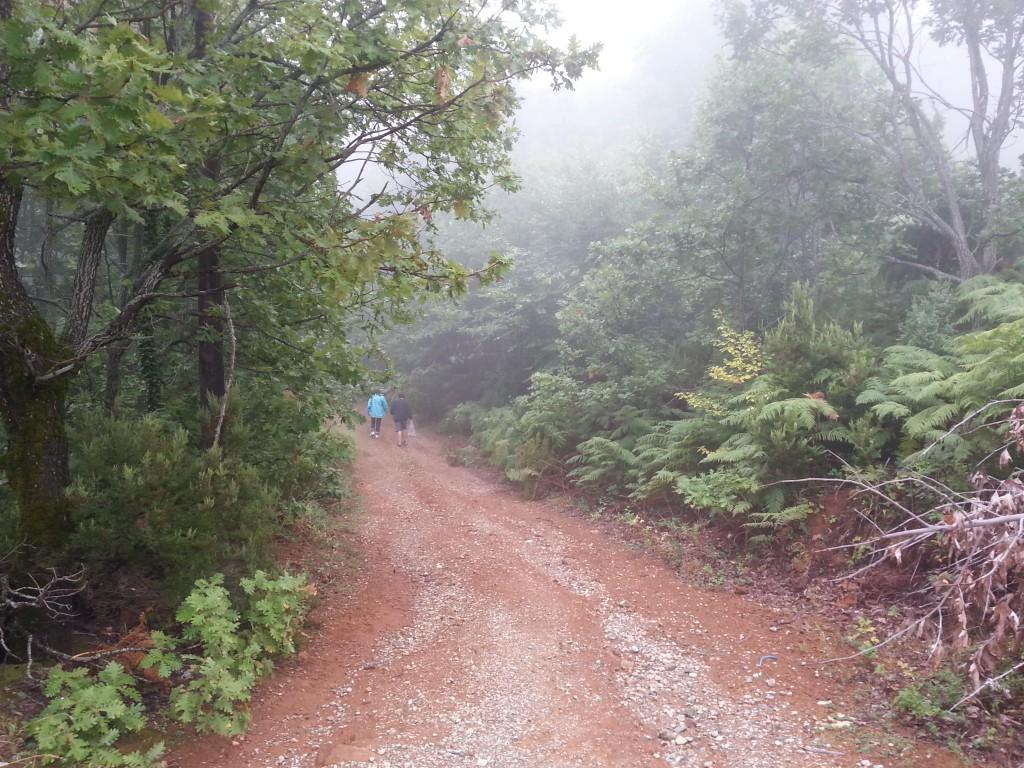 Niucht die Nebelwälder des Himalaya: Mavrovouni im Herbst.