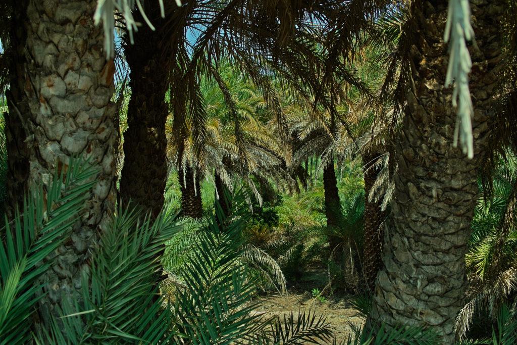 Palmenhain von Vai