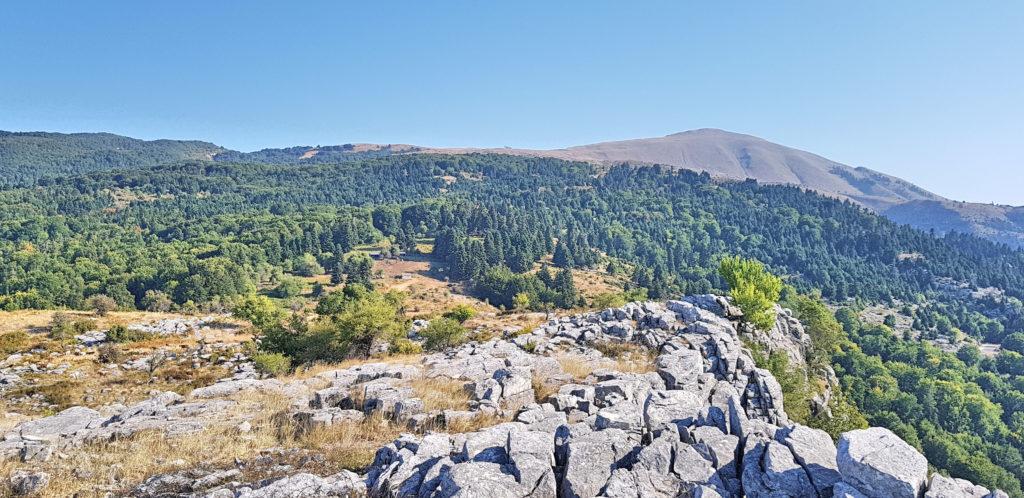 So geht Klimawandel: Rechts ist das Ossamassiv ziemlich Kahl, links dicht bewaldet.