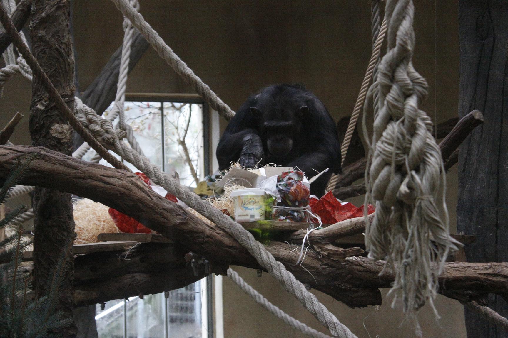 Zoo-Bescherung