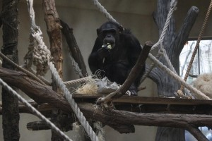 Zoo-Bescherung5