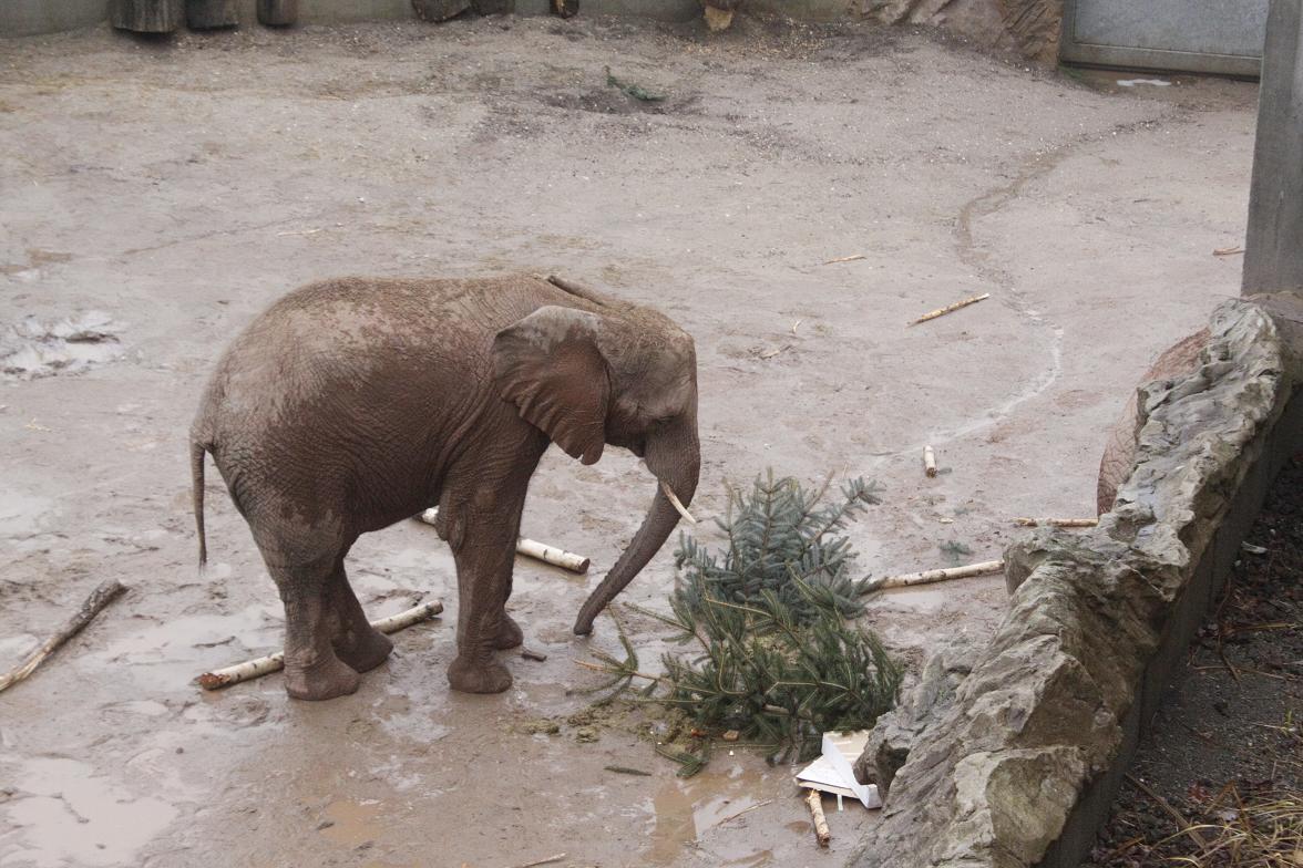 Zoo-Bescherung7