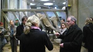 Patenschaft für Elefantendame Bibi