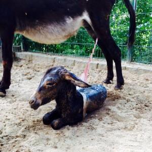 Esel Zoo Montag