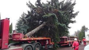 Halle saale weihnachtsbaum sammelstelle