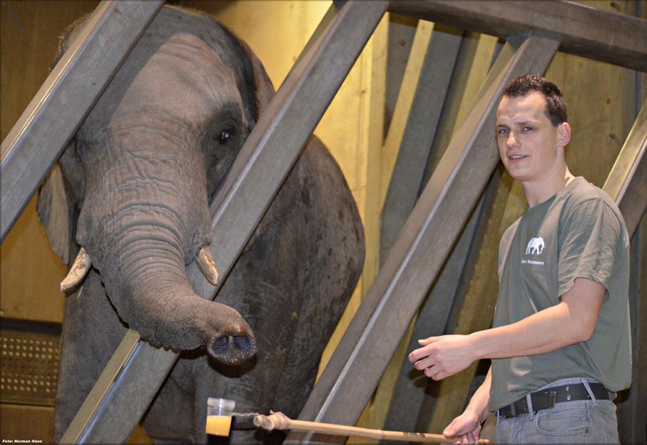Elefant Zoo