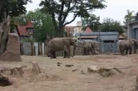 zoo elefanten