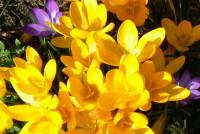 120_Floristisches zur Osterzeit