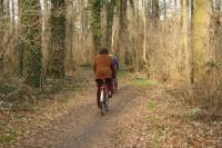 Der Auwald im Frühjahr. Foto: privat