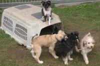 Wissen Sie, wie Hunde kommunizieren? Foto: privat