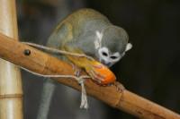 Kenia: Ran an die Inhalte Foto: Zoo Halle