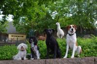 1. Die Tageswanderung für Hunde verspricht ein besonderes Erlebnis für die Vierbeiner und Ihre Besitzer. Foto: Zoo Halle