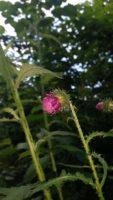 Blume-der-Woche-21.juni2016