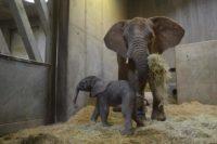 Tamikas Bruder (Foto (c) Zoo Halle)