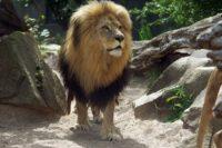 © Zoo Halle