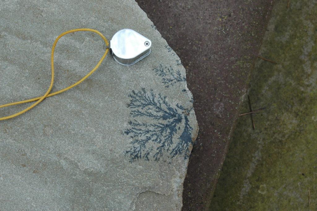 dendrit-fossil-pflanze-des-monats-mineral
