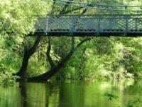 Die wilde Saale mit Blick auf die Schwanenbrücke, (c) Leben am Fluss