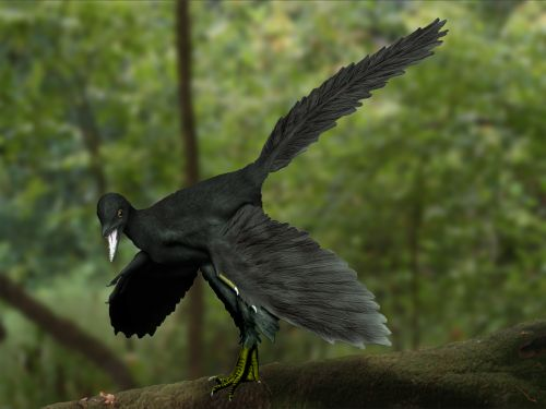 archaeopteryx_nt