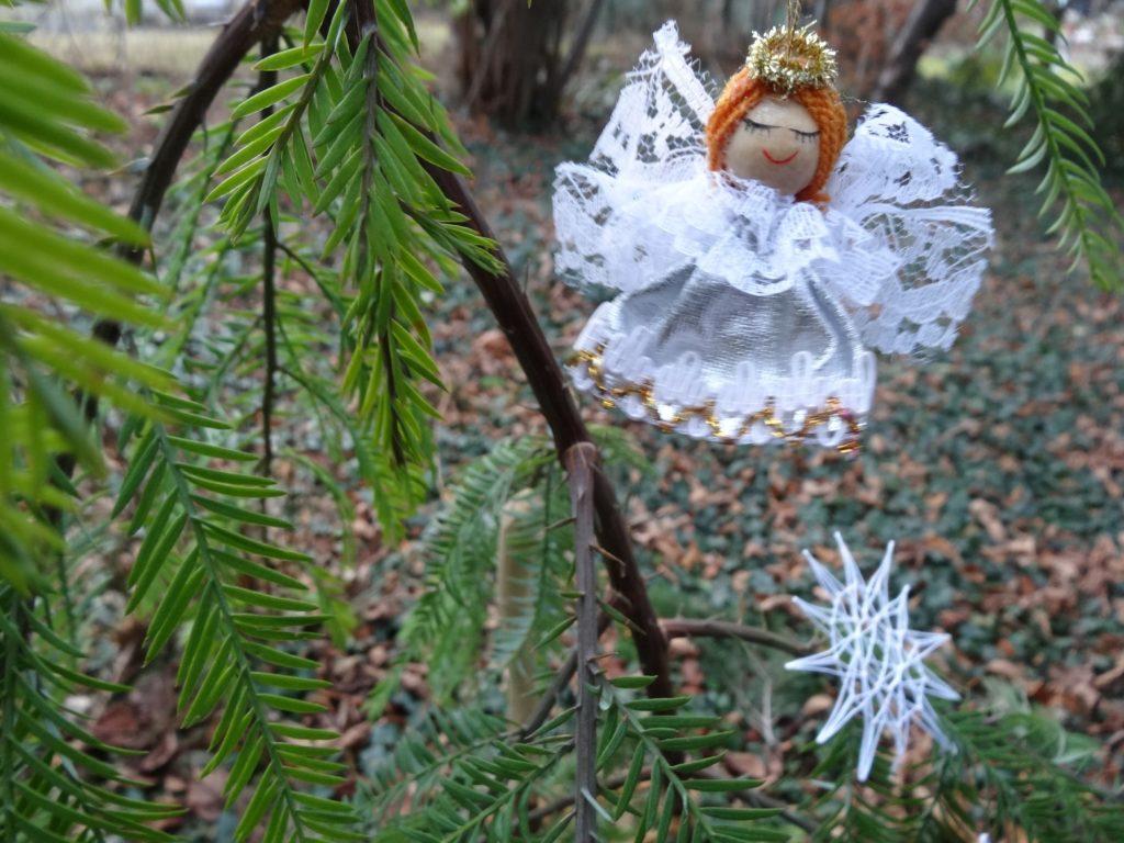 Pflanze der Woche 26.12.2016-2.01.2017 Weihnachtsbaumas2