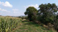 Feldweg bei Wickerode